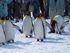 雪の中を歩くペンギン