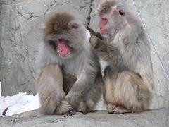 旭山動物園 ニホンザル