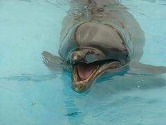 美ら海水族館のかわいいイルカ